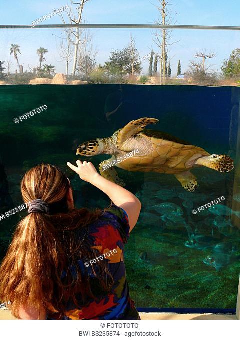 loggerhead sea turtle, loggerhead Caretta caretta, woman at the pane of an outdoor aquarium luring an animal swimming by with a finger, Spain