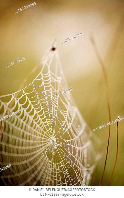 spiderweb in Natural Park of Lagunas de la Mata y Torrevieja, Torrevieja, Alicante, Comunidad Valenciana, Spain, Europe