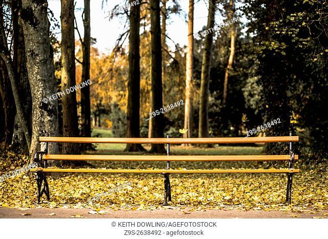 Park Bench in Autumn Light in Grounds of Kilkenny Castle, Kilkenny City, Ireland