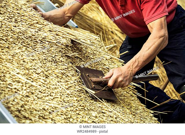 Man thatching a roof, standing on a ladder, dressing the thatch using a leggett