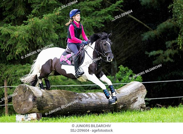 Pinto Pony. Girl on a skewbald pony negotiating an obstacle during a cross-country ride. Germany