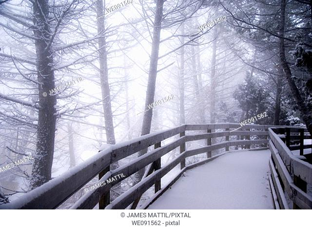 Snow-covered wooden boardwalk leads into a mysterious winetr forest at Mammoth Hot Springs in Yellowstone Park