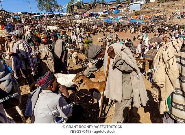 The Saturday Livestock Market In Lalibela, Ethiopia