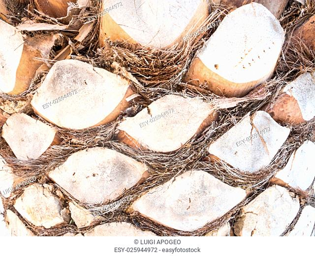 palm bark forms. In front of a bark palm. Palm background
