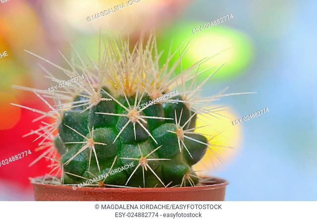 Single small decorative cactus in a pot