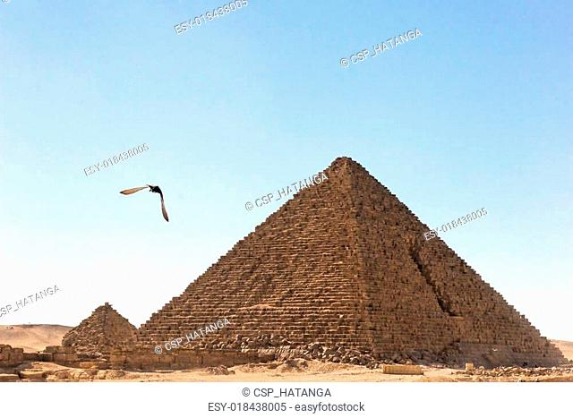 Giza pyramid with flying bird