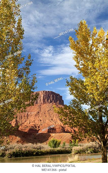 Fall colors along the Colorado River in the red rock country of the Colorado River Recreation Area. near Moab,Utah
