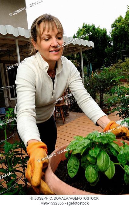 Woman tending home garden, Thousand Oaks, California, USA