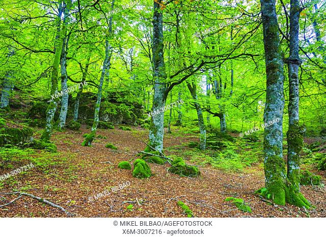 Enchanted forest. Urbasa-Andia Natural Park. Navarre, Spain, Europe