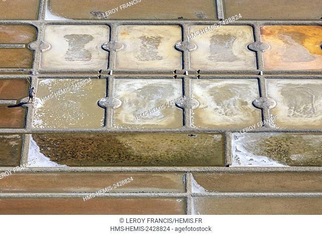 France, Loire Atlantique, Guerande, Guerande salt marshes, salt worker collecting the salt (aerial view)