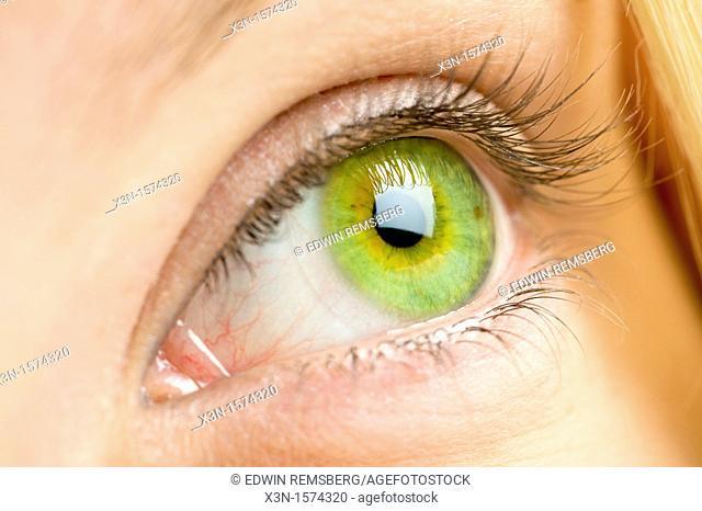 Close up of female green eye