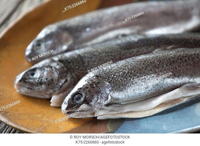 Three Rainbow trout