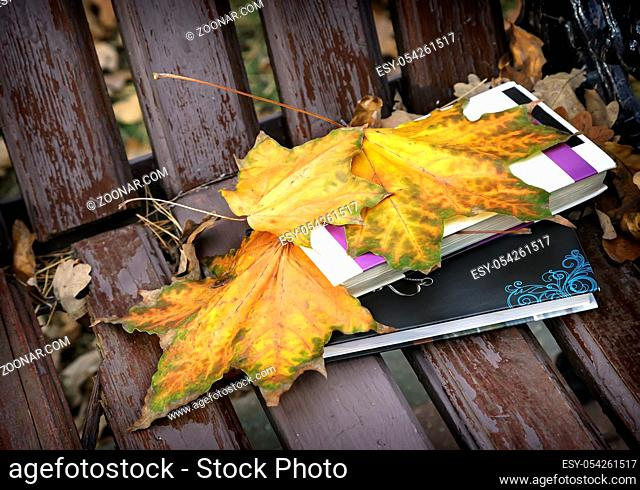 On a wooden bench in the Park there is a book and yellow fallen autumn maple leaves