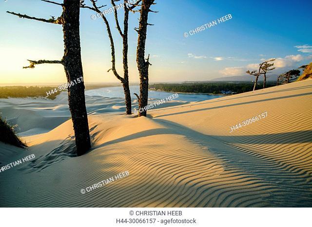 North America, American, Pacific Northwest, Oregon, Oregon Coast, Oregon Dunes National Recreation Area