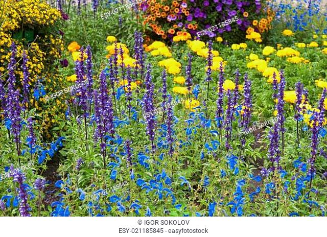 beautiful flowers in the garden, close-up