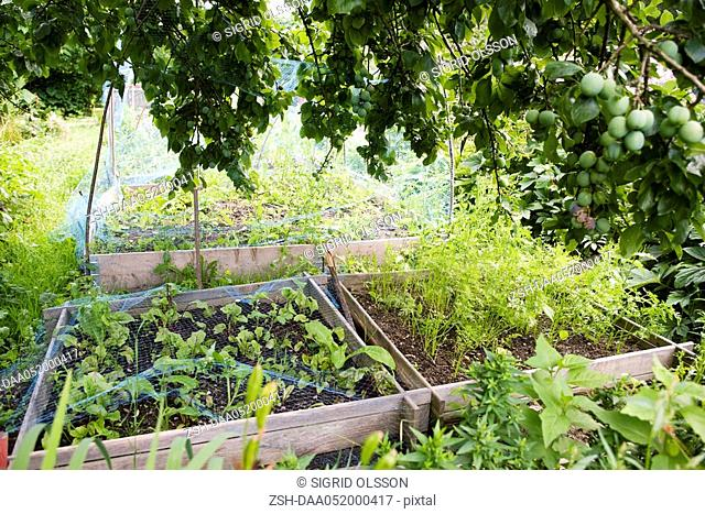 Netting protecting vegetables growing in garden