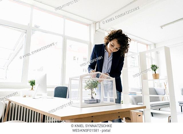 Businesswoman in office taking care of bonsai trees