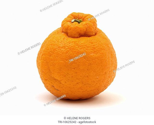 Korean Jeju Orange