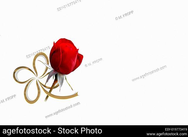 Rose und Klee