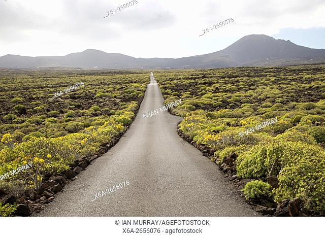 Straight sealed tarmac road crossing lava flows Malpais de Corona, Lanzarote, Canary Islands, Spain