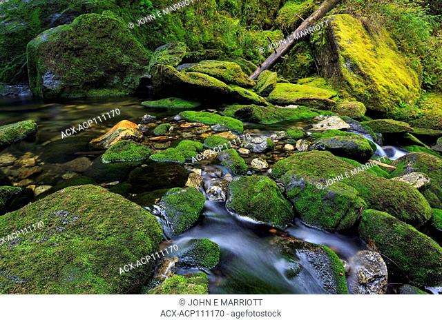 Small creek in the Great Bear Rainforest, BC