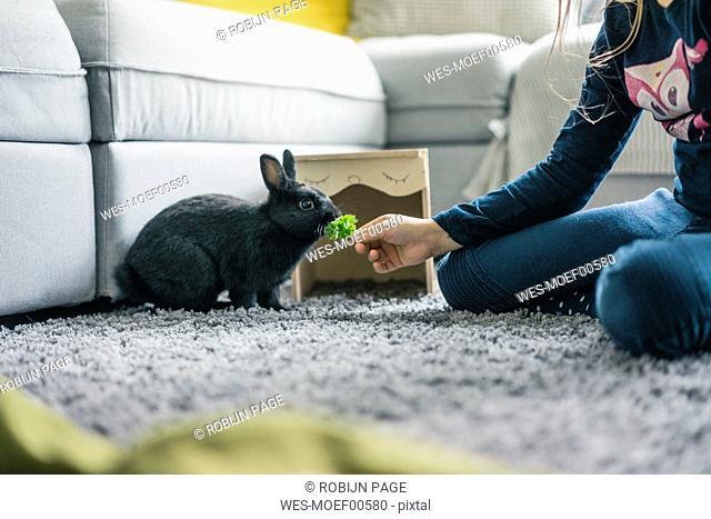 Girl feeding hare in living room