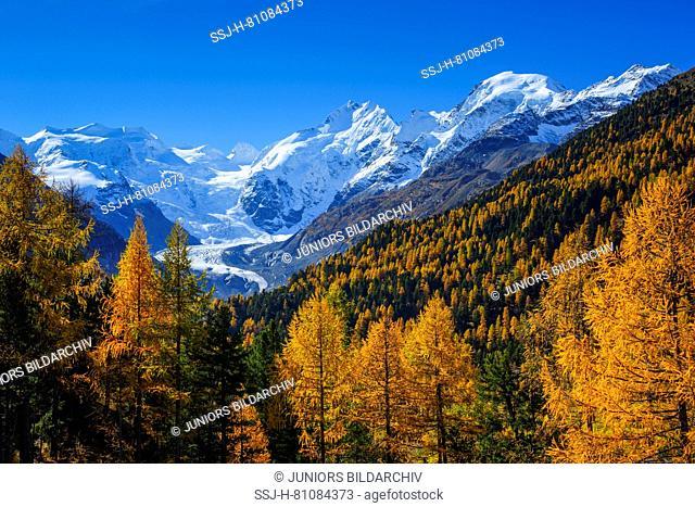 Piz Palue (3905 m), Piz Bernina (4049 m), Piz Morteratsch (3751 m) and the Morteratsch Glacier in autumn