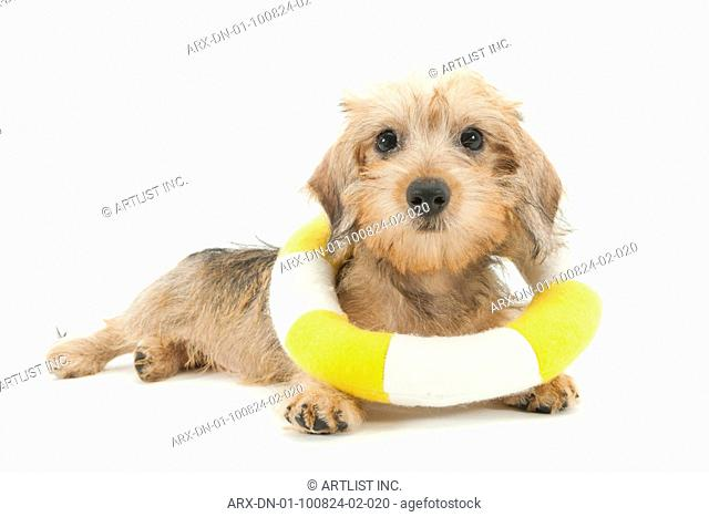 A puppy with a swim tube
