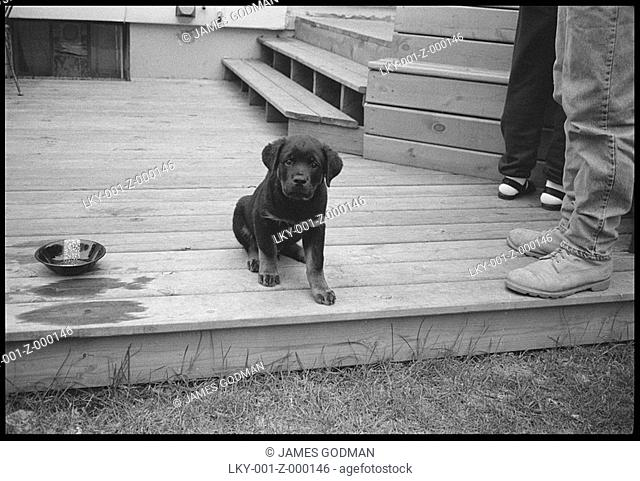 Puppy, sitting on deck, looks at camera'