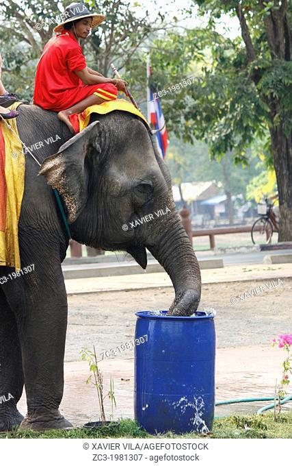 Elephant, Ayutthaya, Thailand