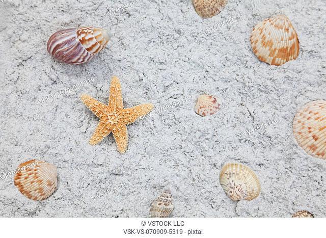 USA, Florida, St. Pete Beach, Starfish and seashells on sand