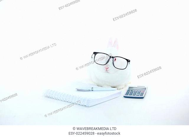 White bunny wearing human glasses with stationary and calculator on white background