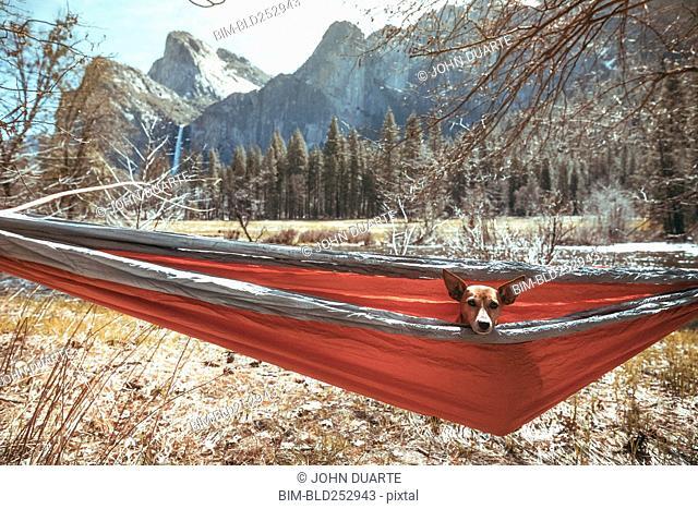 Dog sitting in hammock near mountains