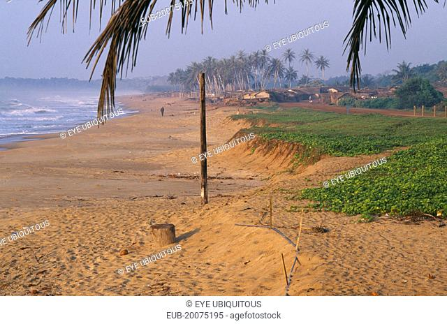 View along sandy beach with overhanging palm tree and green vegetation growing along side of beach