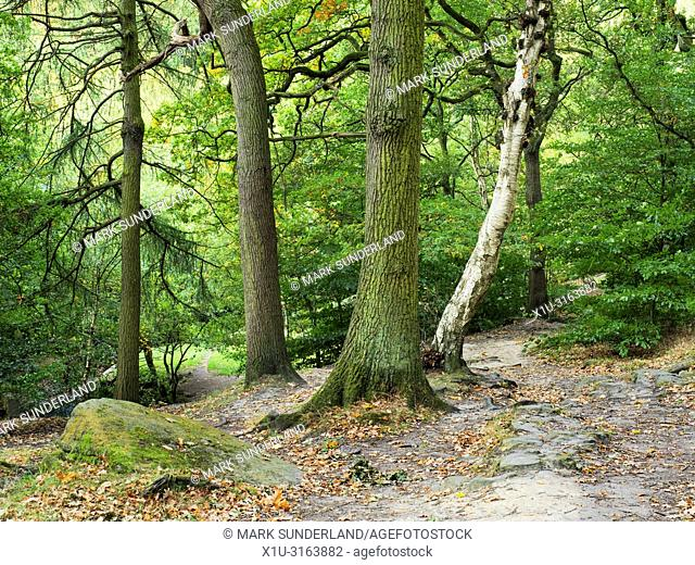 Early autumn woodland at Shipley Glen near Baildon West Yorkshire England