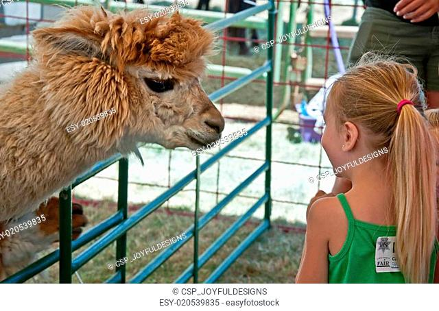 ALBANY, OR - JULY 16 - Linn County Fair Child and Alpaca