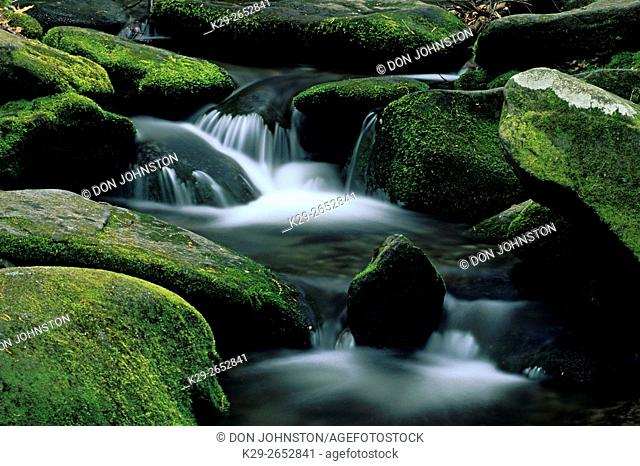 Moss-covered boulders and waterfall in Roaring Fork, Great Smoky Mountains National Park, Tennessee, USA
