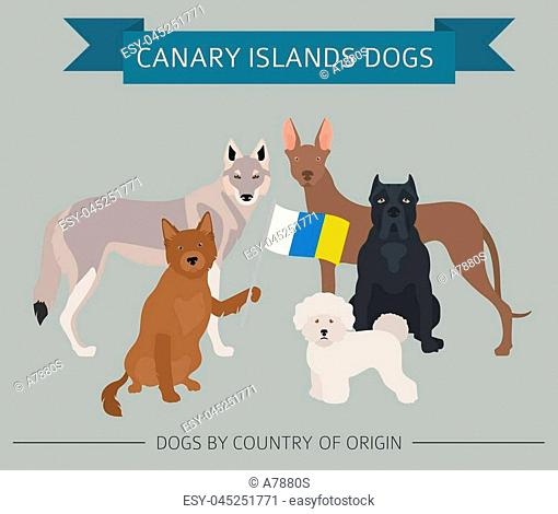 Dogs by country of origin. Spain. Canary islands dog breeds. Infographic template. Vector illustration