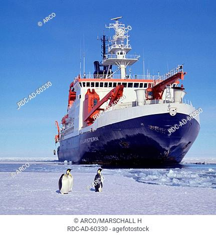 Icebreaker and research ship FS Polarstern and Emperor Penguins in the Weddell Sea, Antarctica, Aptenodytes forsteri