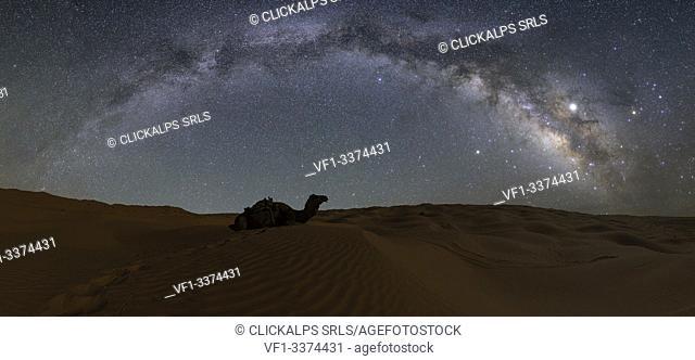 Milky way over dromedary in the sand dunes, Sahara desert, Tunisia, Northern Africa