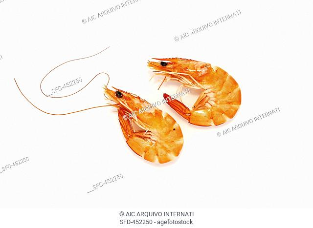 Two prawns