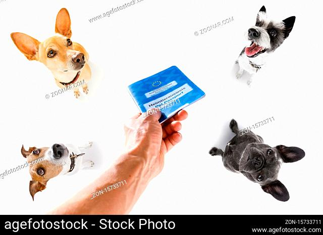 holiday vacation group of dogs waiting in airport terminal ready to board the airplane or plane at the gate, flight ticket with owner