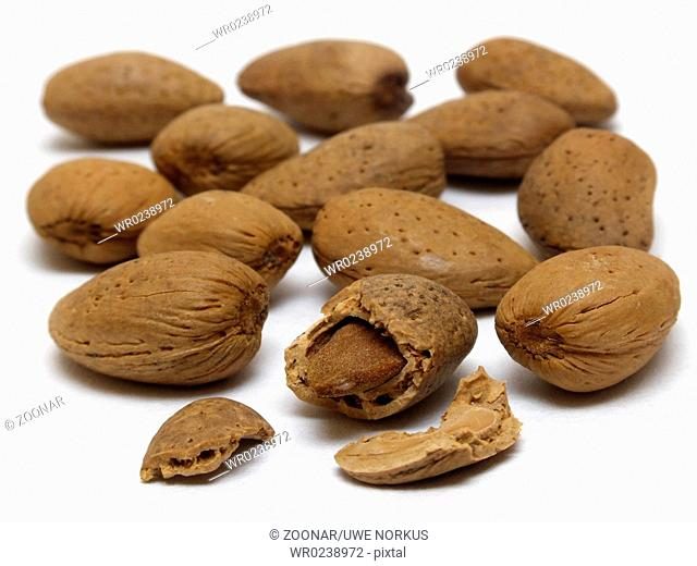 Krachmandeln / almonds prunus fruticosa