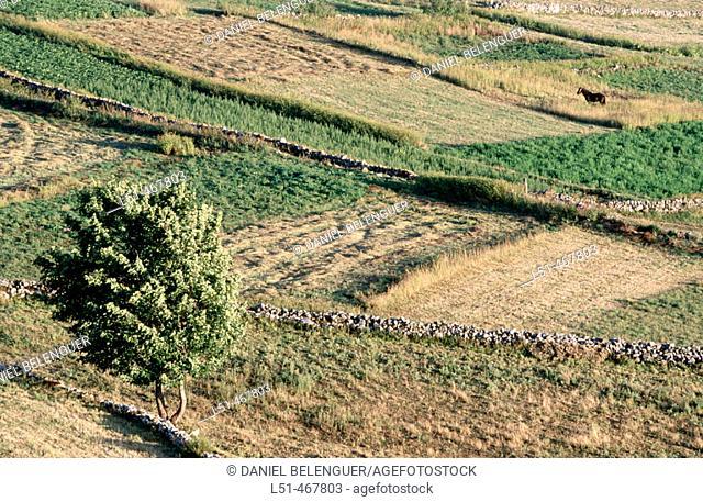 Santa Maria del Puerto. Reaping fields. Somiedo Natural Park. Asturias. Spain