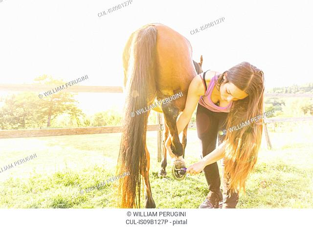 Woman checking horse's hoof