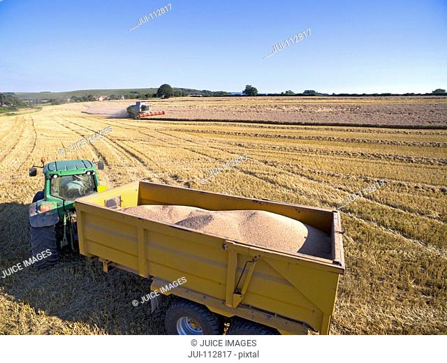 Tractor trailer carrying harvested barley in field