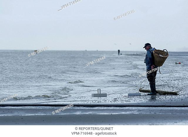 Bray-Dunes - 18 october 2016 Les pecheurs poussent leur filet en quete de crevettes grises. The fishermen push their net along the coast in search of brown...