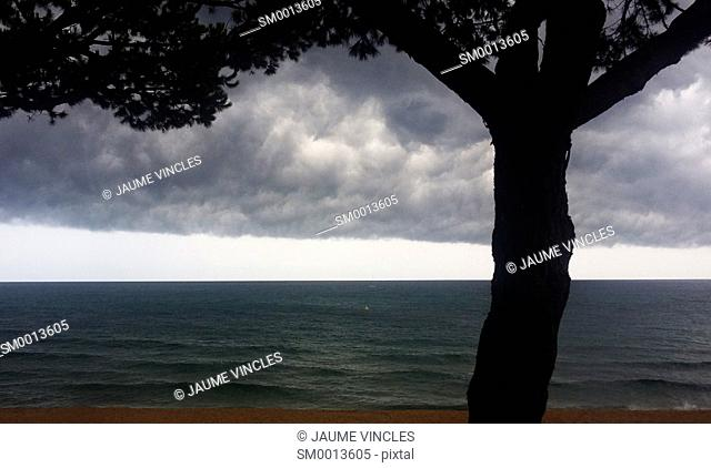 Silhouette of tree, storm clouds and horizon over sea. Caldes d'Estrac, Barcelona Province, Spain