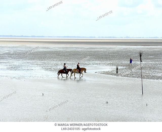 Horses in Wadden Sea at Island Neuwerk, Elbe estuary, North Sea, Hamburg, Germany