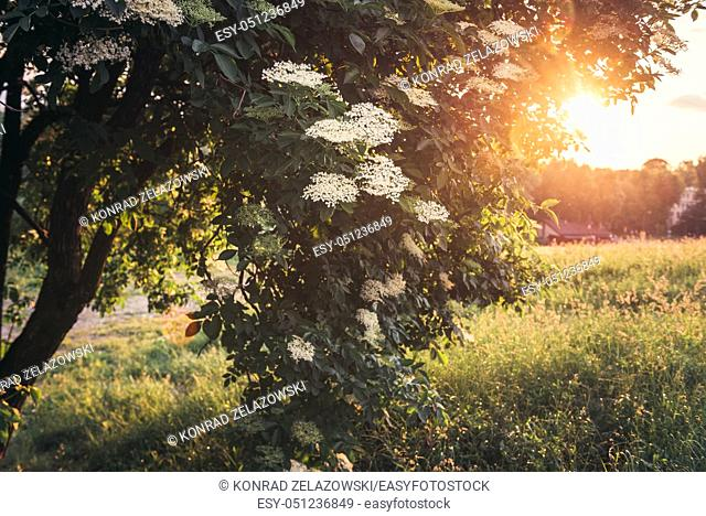 Sunset in Moczydlo Park in Warsaw, Poland